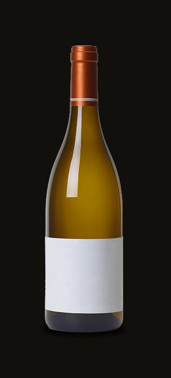 Bourgogne Aligoté Novelty